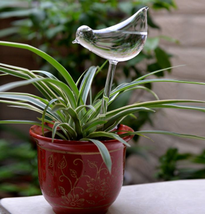 Glass Bird Style Automatic Drip Watering System Potted Plants Irrigation Controller